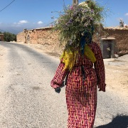 Berber woman carrying lavender